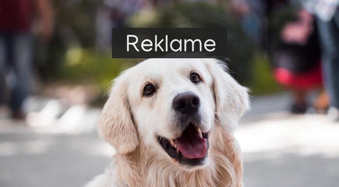 Sød og glad hund